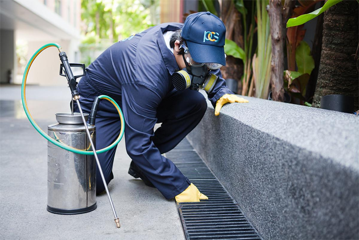 Role of Pest Control Solutions